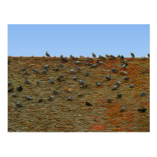 France, Jura, Arbois, Pigeons on the roof Postcard