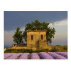 France, Provence. Field of lavender and Postcard