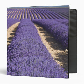 France, Provence. Rows of lavender in bloom. 3 Binders
