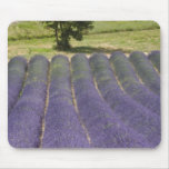 France, Provence. Rows of lavender in bloom. Mousepads