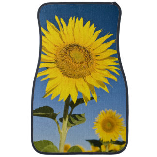 France, Provence, Valensole. Sunflowers stand Car Carpet