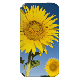 France, Provence, Valensole. Sunflowers stand Incipio Watson™ iPhone 6 Wallet Case