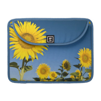 France, Provence, Valensole. Sunflowers stand MacBook Pro Sleeves