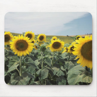France Provence, View of sunflowers field Mouse Pad