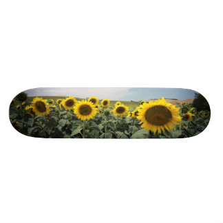 France Provence, View of sunflowers field Skateboard Deck