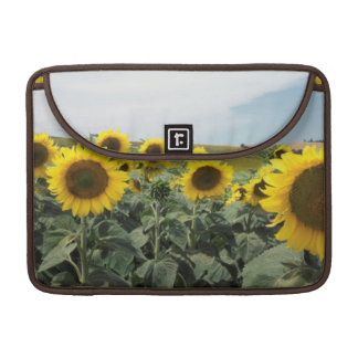 France Provence, View of sunflowers field Sleeves For MacBook Pro