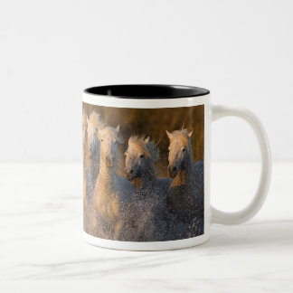 France, Provence. White Camargue horses Two-Tone Coffee Mug