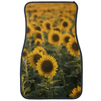 France, Vaucluse, sunflowers field Car Liners