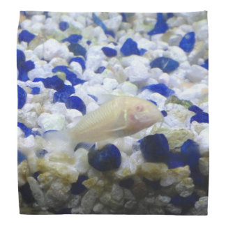 Francis the albino cat fish bandana