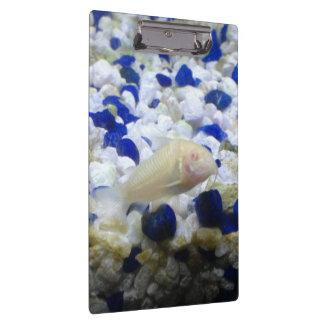 Francis the albino cat fish clipboard