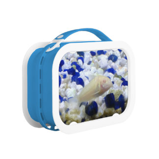 Francis the albino cat fish lunchboxes