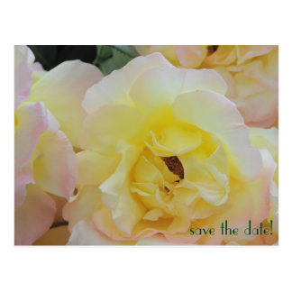 Francy Roses Save the Date Postcard