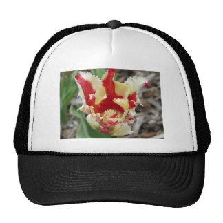 frange de tulipe, rouge et jaune casquettes de camionneur