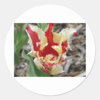 frange de tulipe, rouge et jaune sticker rond
