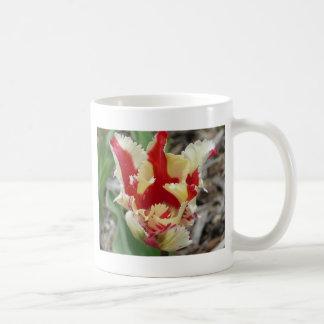 frange de tulipe, rouge et jaune tasse
