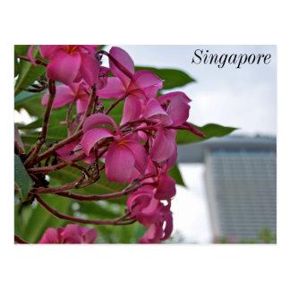 Frangipani Blossom by the Bay Postcard