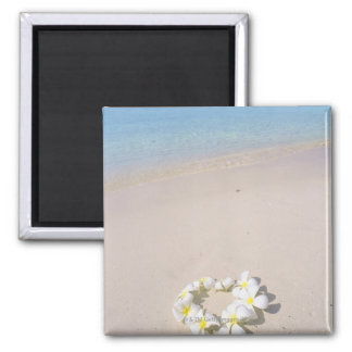 Frangipani on the beach magnet
