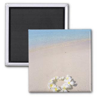 Frangipani on the beach square magnet