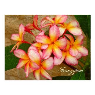 Frangipani Postcard