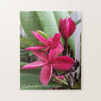 Frangipani Puzzle: Hilo Beauty Jigsaw Puzzle