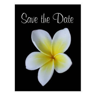 Frangipani save the date wedding announcement postcard