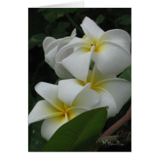 Frangipanis Note Cards