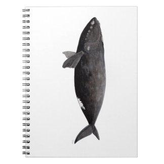 Frank whale of Atlantic Notebooks