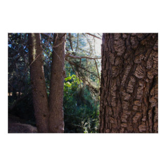 Franklin Canyon Park Trees 3 Poster