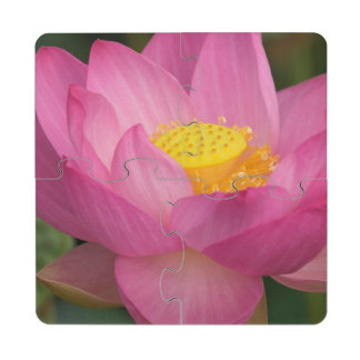 Franklin NC, Perry's Water Garden, Lotus 2 Drink Coaster Puzzle