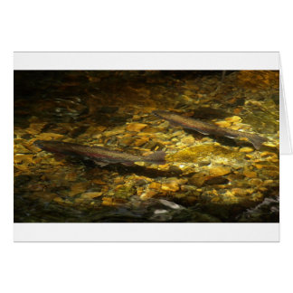Freash water Trout. Card