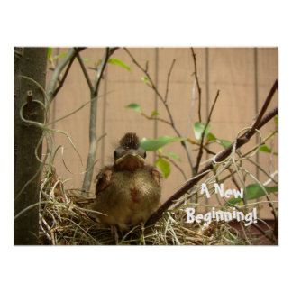 Fred the Baby Cardinal Poster
