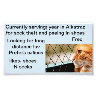 Fred the orange Tabby cat photo profile
