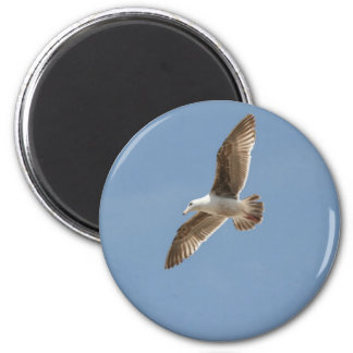Free as a Bird (Flying Seagull) Magnet