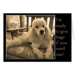 Free Poodle Hugs For A Friend Greeting Card