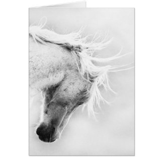 Freedom's Head Shake Wild Horse Greeting Card