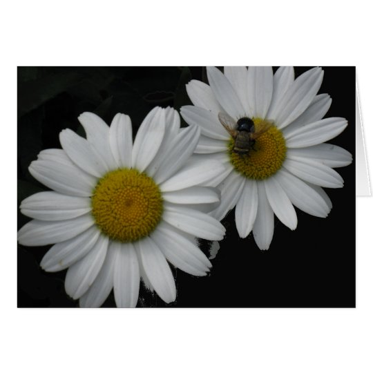 French Birthday Card, Daisies and Bee Card