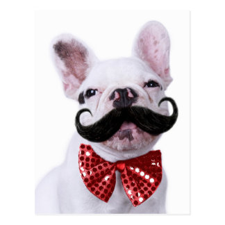 French Bull Dog Puppy With Mustache Postcard