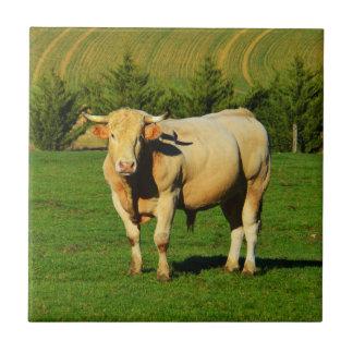 French bull tile