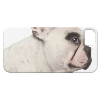 French Bulldog (4 years old) close-up iPhone 5 Covers