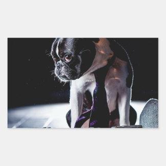 French Bulldog Amateur Photographer Dog Sticker