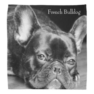 French Bulldog Bandana