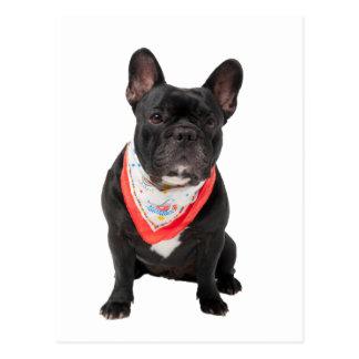 French Bulldog,  dog cute beautiful photo Postcard