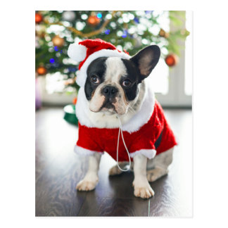 French Bulldog Dressed Up In Santa Costume Postcard