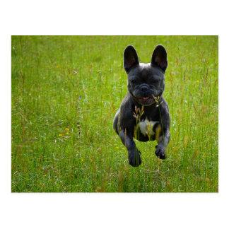 French Bulldog jumping on a high grass field Postcard