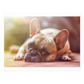 french bulldog laying postcard