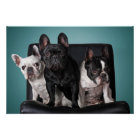 French Bulldog On The Chair Poster