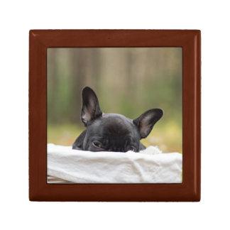 french bulldog peeking puppy gift box