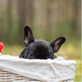 french bulldog peeking puppy photo sculpture keychain