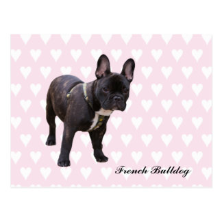 French Bulldog pink & white hearts postcard