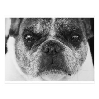 french-bulldog postcard